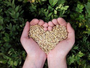 Getreide_Herz_pixabay